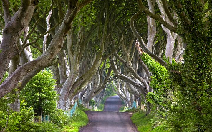 1. «Игра престолов»: Королевский тракт - аллея Дарк Хеджес, Ирландия.
