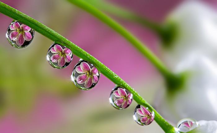 4. Цветы в каплях.