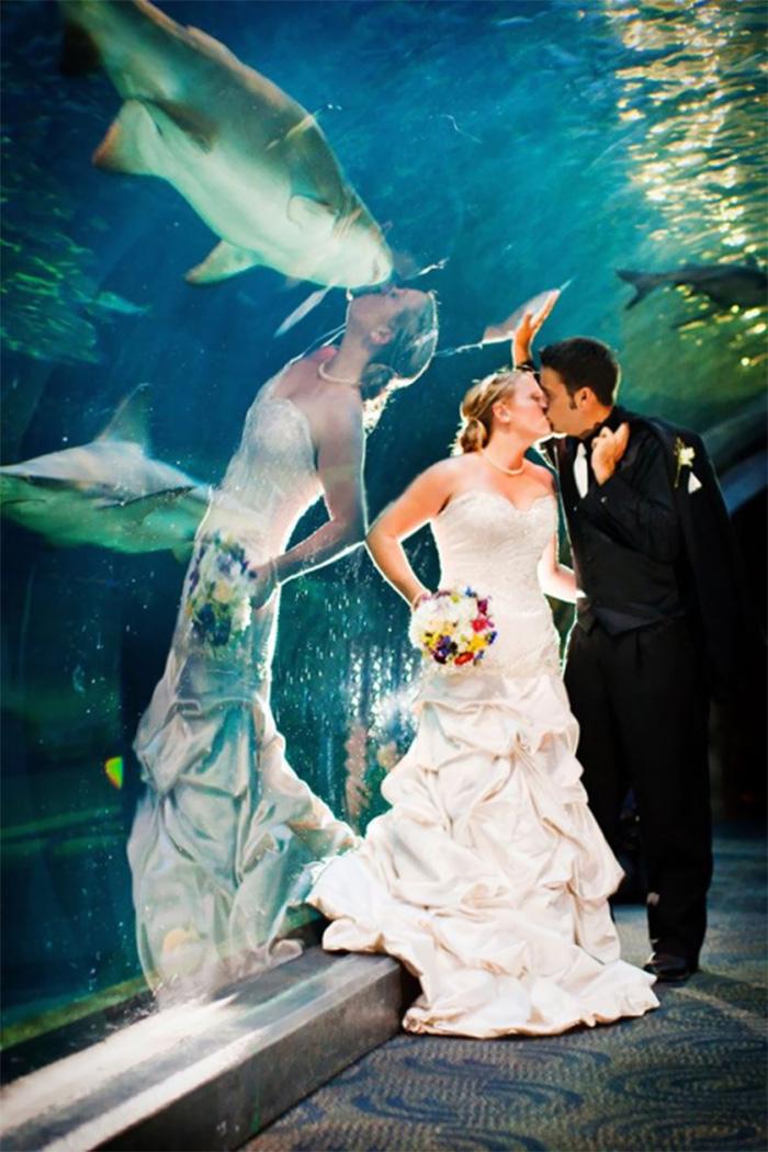 9. Поцелуй с акулой.