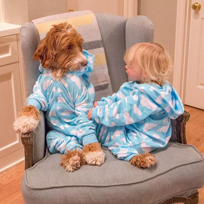 8. Рейган – очень дружелюбный пес, он отлично ладит и с детьми и с другими собаками.