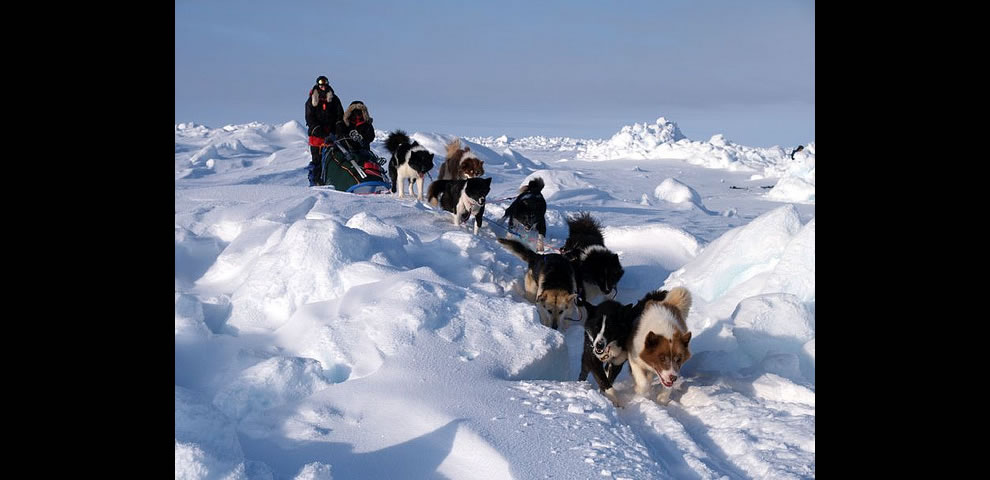 6. Часто никакая техника не может совладать с холодом и снегом, поэтому экспедиции продолжают свой путь на собачьих упряжках.