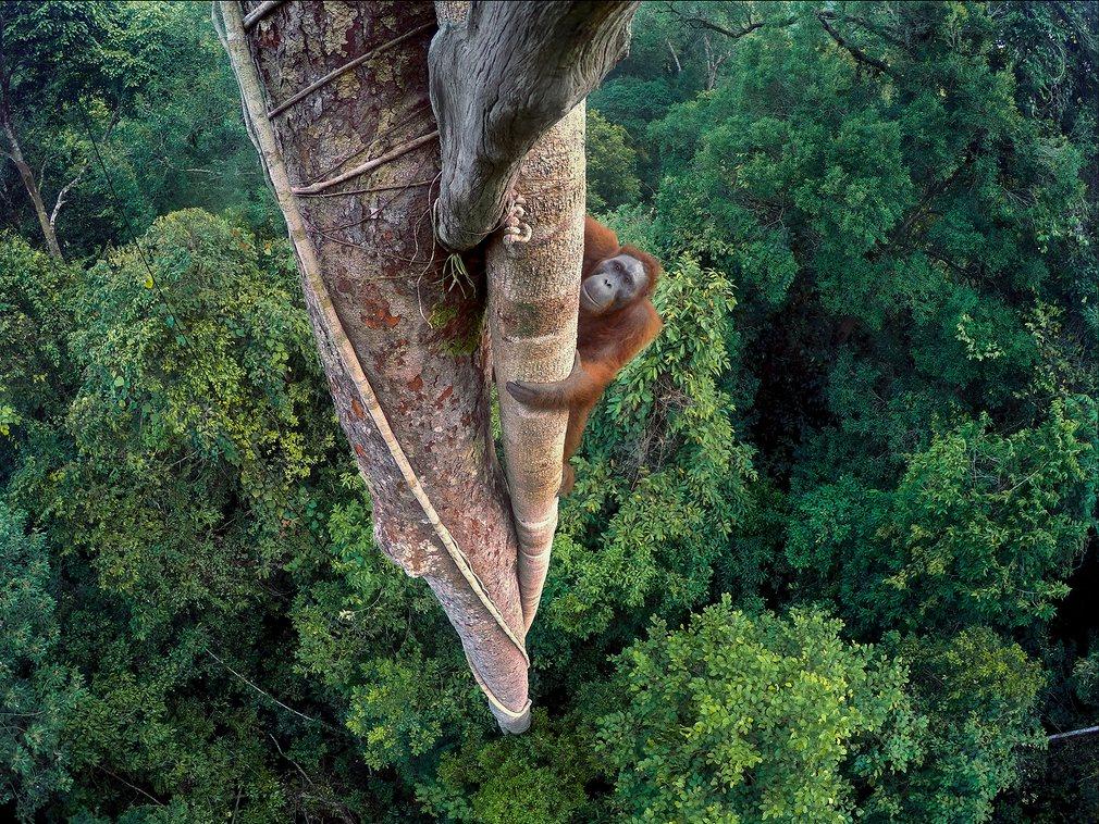 1. Фото: Тим Лэман. Победитель конкурса Wildlife Photographer of the Year.