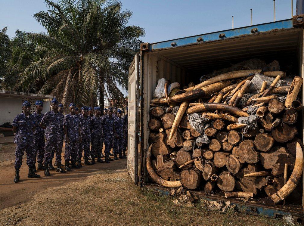 10. Нелегальные слоновые кости. Фото: Брент Стиртон. World Press Photo.