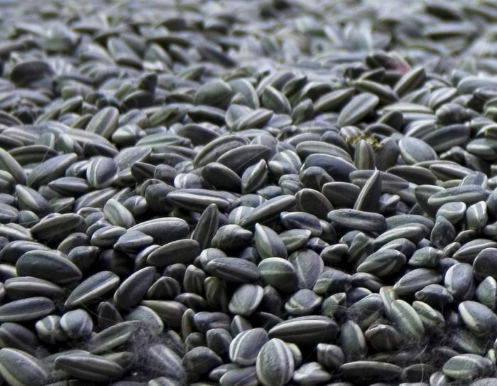 5. Семена подсолнечника.