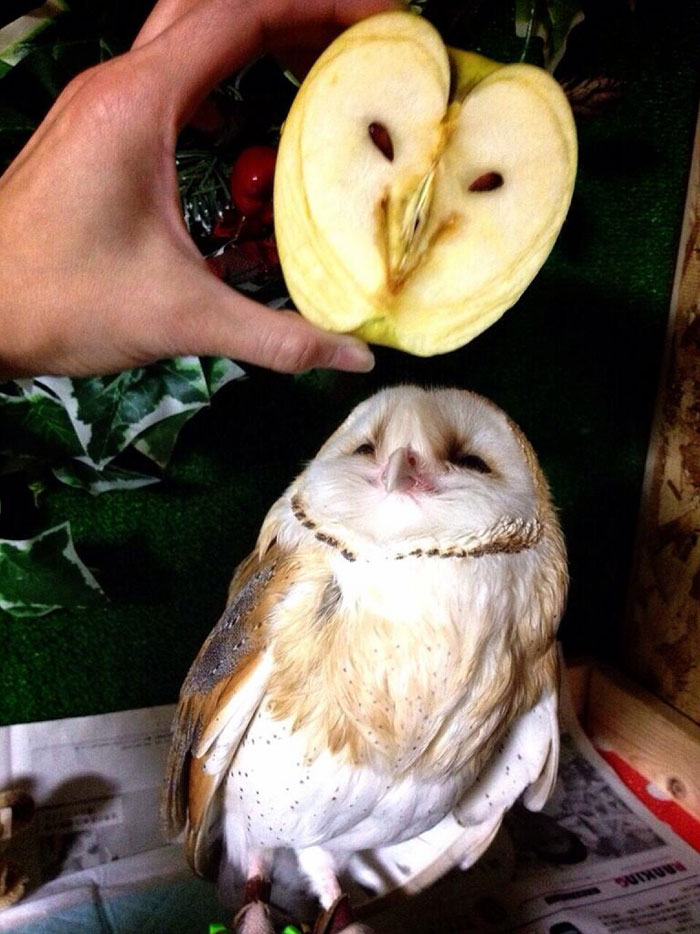 9. Яблоко, похожее на довольную сову.