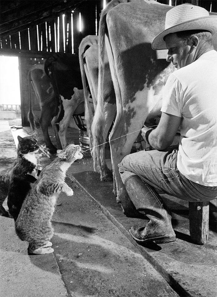 6. В очередь за молоком.