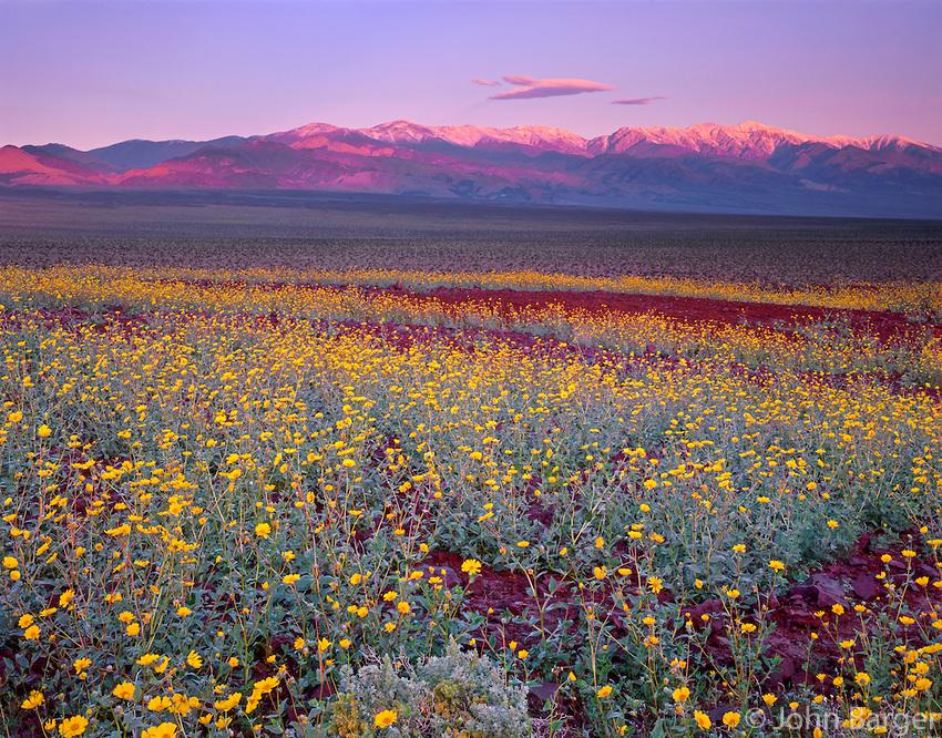 10. Пустыня цветов.
