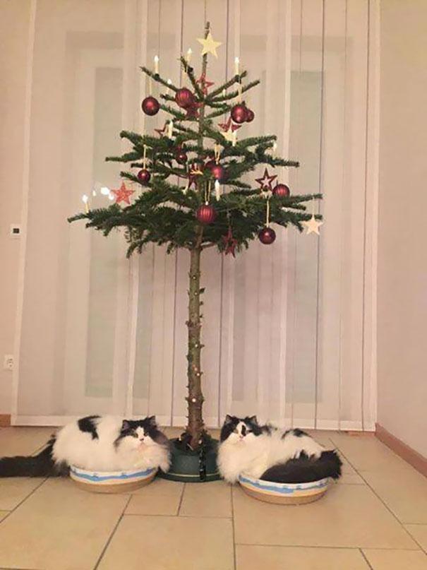 12. Но, если вам лень придумывать средства защиты от ваших котов, просто подберите подходящую елку. Кажется, эти ребята не очень довольны выбором.