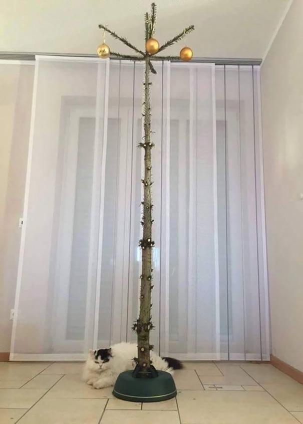 4. Так должна выглядеть новогодняя елка у владельцев кошек.