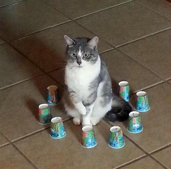 13. Самая популярная теория заключается в том, что иллюзия замкнутого пространства дает кошке почувствовать себя в большей безопасности.