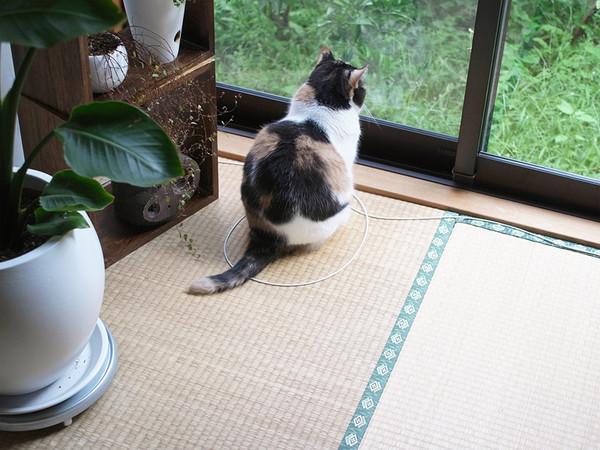 2. Хозяин кота заметил, что каждый раз проходя мимо этого места кот садился прямо в этот круг.