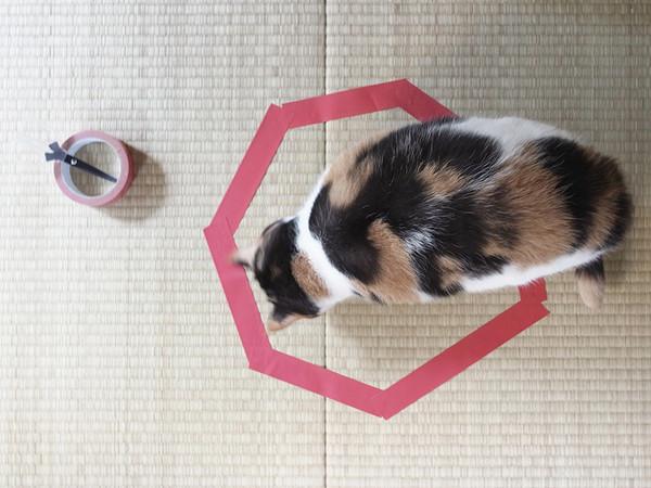 4. Он был в шоке, когда его кот залез в этот круг.